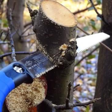 Cưa cầm tay cắt tỉa cành cây